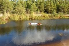 Pūķis peld upē